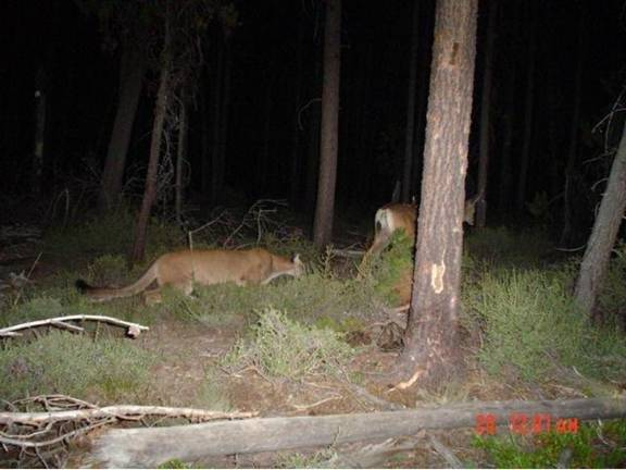 Scary+deer+camera+pictures