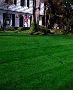 Fall lawn care: Power seeding - Maggie